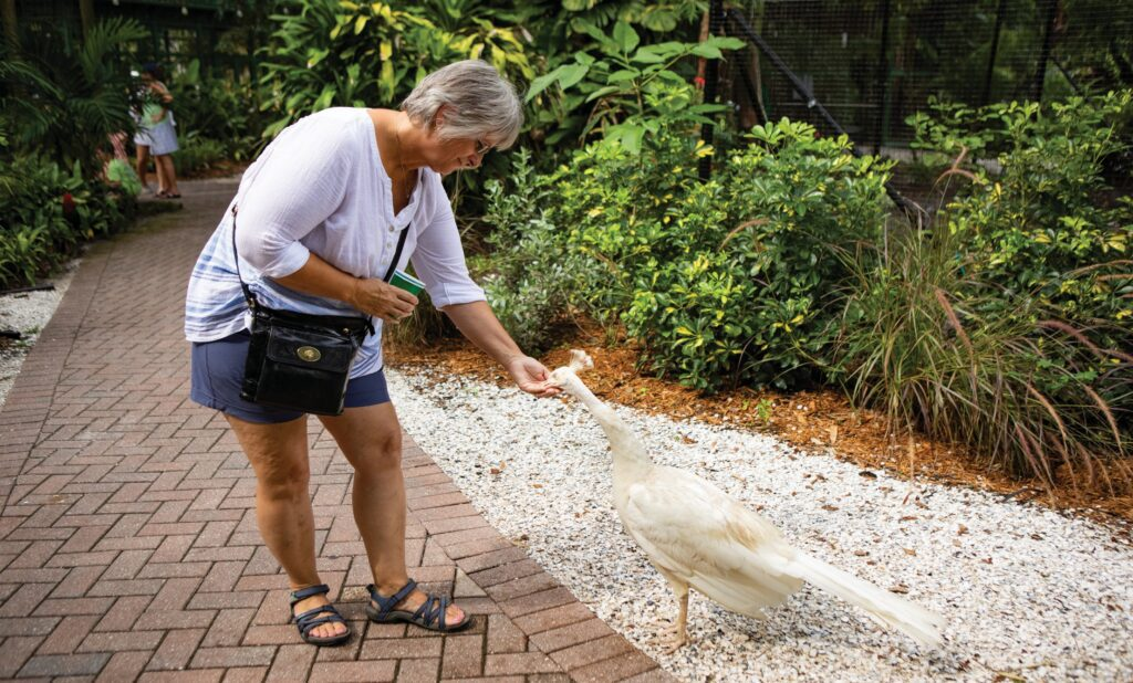 Guest Theresa Kelley feeds an albino peacock treats she purchased at the gardens.